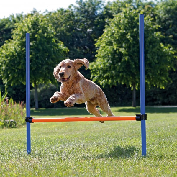 Dog Activity Agility Hürde, 123 × 115/ ø 3 cm, blau/orange